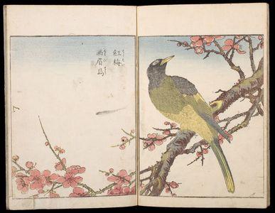 Kitao Shigemasa: Sketches of Birds and Flowers (Hanatori sharei zu), Vol. 3 - Harvard Art Museum