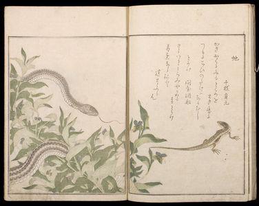Kitagawa Utamaro: Picture Book: Selected Insects (Ehon mushi erabi), 2nd of 2 Volumes, Mid Edo period, 1788 - Harvard Art Museum