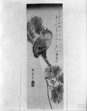 Utagawa Hiroshige: Owl on a Pine Branch by Moonlight, Late Edo period, circa early 1830s - Harvard Art Museum