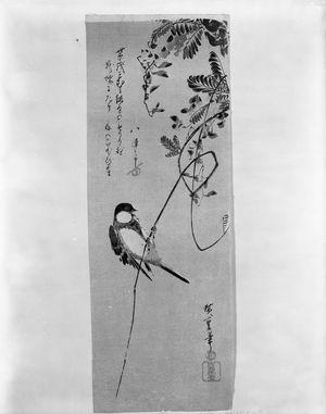 Utagawa Hiroshige: WISTERIA AND WOOD-CRACKER BIRD - Harvard Art Museum