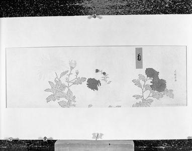 喜多川歌麿: Pink and Red Chrysanthemums - ハーバード大学