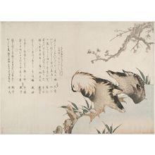 葛飾北斎: Mandarin Ducks (Oshidori) Beneath Blossoming Plum by a River, with verses by Hokusai II, Heishi, Kôchô, Toseki, Taigadô, Taizai, Toen, Taito (formerly Hokusai), Taito and Tobun, Edo period, circa 1813 - ハーバード大学