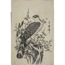 Kitagawa Tsukimaro: Hawk on Blossoming Plum Tree - Harvard Art Museum