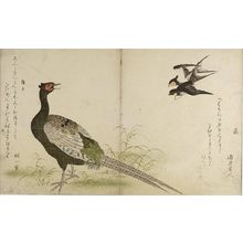 Kitagawa Utamaro: PHEASANT AND TWO SWALLOWS - Harvard Art Museum
