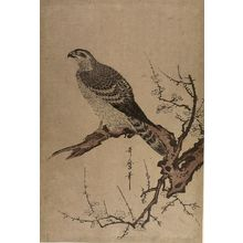 Kitagawa Utamaro: EAGLE ON PLUM TREE - Harvard Art Museum