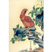 Sugakudo: FORTY-EIGHT DIFFERENT SPECIES OF FALCONS.