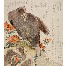 窪俊満: Hawk (Taka) and Azalea, from the series Seven Bird-and-Flower Prints for the Fuyôren of Kanuma in Shimotsuke Province (Yamagawa Shimotsuke Kanuma Fuyô-ren kachô shichi-ban tsuzuki no uchi), with poems by Senshunan and associates, Edo period, circa 1810 - ハーバード大学