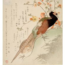窪俊満: Pheasants and Peach Blossoms, from the series Seven Bird-and-Flower Prints for the Fuyôren of Kanuma in Shimotsuke Province (Yamagawa Shimotsuke Kanuma Fuyô-ren kachô shichi-ban tsuzuki no uchi), with poems by Senshunan and associates, Edo period, circa 1810 - ハーバード大学