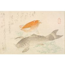 Kubo Shunman: Black and Red Carp (Koi), from the Series of Five Produced by Shunman (Goban no uchi Shunman sei), with poems by Shôsôdai and Bunbunsha, Edo period, circa early 19th century - Harvard Art Museum