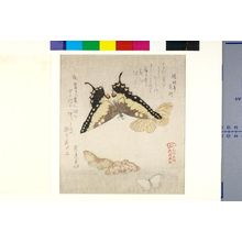 Kubo Shunman: One Large and Four Small Butterflies with text beginning