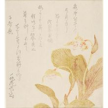 Kubo Shunman: Orchids, with poem by Ichijian Kigyoku, Edo period, either 1804 (Spring of the Year of the Rat) or 1812 - Harvard Art Museum
