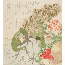 窪俊満: Peacock and Peony, from the series Seven Bird-and-Flower Prints for the Fuyôren of Kanuma in Shimotsuke Province (Yamagawa Shimotsuke Kanuma Fuyô-ren kachô shichi-ban tsuzuki no uchi), Edo period, circa 1810 - ハーバード大学