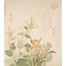 窪俊満: Pot Marigold (Kinsenka) and Rashomon Flowers, from the series An Array of Plants for the Kasumi Circle (Kasumi-ren sômoku awase), with poem by Hoshiawase Hamahagi, Edo period, circa 1804-1815 - ハーバード大学