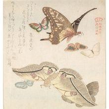 窪俊満: Large Moth and Butterfly and Five Small Butterflies with text beginning