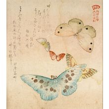 窪俊満: One Large, Two Medium-Sized and Two Small Butterflies with text beginning