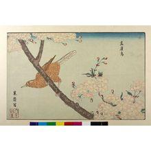 Kuwagata Keisai: KAMIYOCHO ON CHERRY BRANCH - Harvard Art Museum