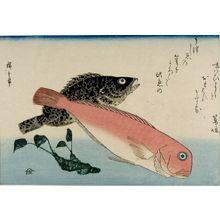 歌川広重: Tile Fish (Amadai), White Horsehead (Ishimochi) and Horseradish (Wasabi), from the series A Shoal of Fishes (Uo-zukushi) - ハーバード大学