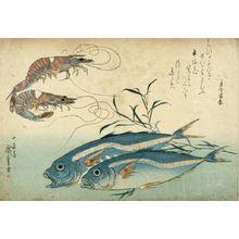 歌川広重: Prawn (Kuruma ebi) and Horse Mackerel (Aji), from the series A Shoal of Fishes (Uo-zukushi), Late Edo period, 19th century - ハーバード大学