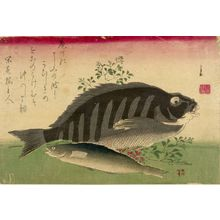 歌川広重: Grouper (Ainame), Rock Cod (Shimadai) and Nandina (Nanten), from the series A Shoal of Fishes (Uo-zukushi) - ハーバード大学