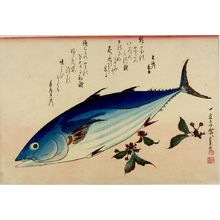 歌川広重: Bonito (Katsuo) and Yukinoshita (Saxifrage), from the series A Shoal of Fishes (Uo-zukushi) - ハーバード大学