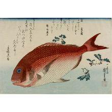 Utagawa Hiroshige: Seabream (Tai) and Japanese Pepper Leaves (Sansho), from the series A Shoal of Fishes (Uo-zukushi) - Harvard Art Museum
