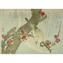 Yashima Gakutei: Nightingale on a Plum Tree, Edo period, circa 1830 - Harvard Art Museum
