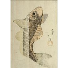 魚屋北渓: Carp Climbing a Waterfall, Edo period, circa early 19th century - ハーバード大学