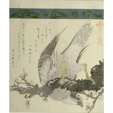 Totoya Hokkei: Falcon on Plum Branch, from the series A Collection of Thirty-Six Birds and Animals (Sanjûroku tori zukushi), Edo period, circa 1825 - Harvard Art Museum