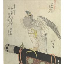 魚屋北渓: KOKUCHO KARAKIYA ITO ZAIKO, A FALCON ON PERCH. - ハーバード大学