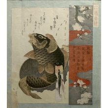 Totoya Hokkei: White Plum Blossom and Carp, from the series Flower Gardens (Hanazono Bansuzuki), Edo period, dated 1823 - Harvard Art Museum