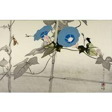 Tsuchiya Rakuzan: Morning Glories and Wasp on Trellis - ハーバード大学