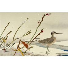 Tsuchiya Rakuzan: Sandpiper with Marshgrass in Snow - ハーバード大学