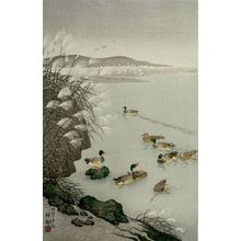 小原古邨: Ducks Swimming under Lakeside Reeds, Shôwa period, dated to 1931 - ハーバード大学