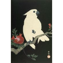 小原古邨: Cockatoo on Pomegranate Branch, Shôwa period, circa 1927 - ハーバード大学