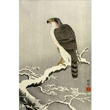 Ohara Koson: Goshawk on Snowy Branch, Late Taishô or early Shôwa period, 1926 - Harvard Art Museum