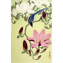 小原古邨: Magpie with Pink and White Magnolia Blossoms, Shôwa period, circa 1931 - ハーバード大学