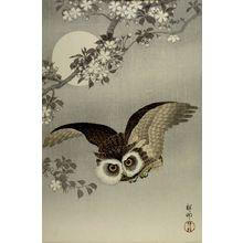 小原古邨: Scops Owl in Flight, Cherry Blossoms and Full Moon, Shôwa period, 1926 - ハーバード大学