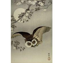 Ohara Koson: Scops Owl in Flight, Cherry Blossoms and Full Moon, Shôwa period, 1926 - Harvard Art Museum