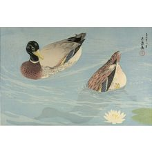 橋口五葉: Two Ducks in a Lilypond, Taishô period, dated 1920 (9th Year of the Taishô Era) - ハーバード大学