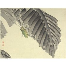 幸野楳嶺: Insect on a Banana Leaf - ハーバード大学