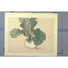 幸野楳嶺: Japanese Radish, Meiji period, 1868-1912 - ハーバード大学