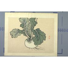 Kono Bairei: Japanese Radish, Meiji period, 1868-1912 - Harvard Art Museum
