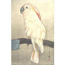 吉田博: Salmon-Crested Cockatoo (ôbatan ômu), from the series At the Zoological Garden (Dobutsuen), Taishô period, dated 1926 - ハーバード大学