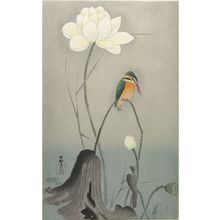 Ohara Koson: Kingfisher with Lotus Flower, Shôwa period, early to mid 20th century - Harvard Art Museum