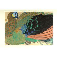 Tsuchiya Rakuzan: Peacock (Shoka Roshûkujaku no osu) - ハーバード大学
