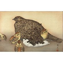 Yoshida Toshi: Snow Grouse (Raichô), Shôwa period, 1930 - Harvard Art Museum