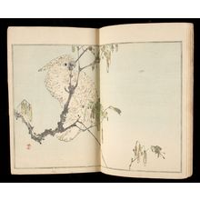 無款: Album of Japanese Bird and Flower Paintings by Watanabe Shotei (Shotei kacho gafu) - ハーバード大学