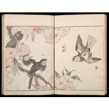 Kitao Shigemasa: Sketches of Birds and Flowers (Hanatori sharei zu), Vol. 1 - Harvard Art Museum