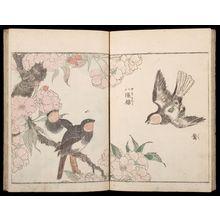 北尾重政: Sketches of Birds and Flowers (Hanatori sharei zu), Vol. 1 - ハーバード大学
