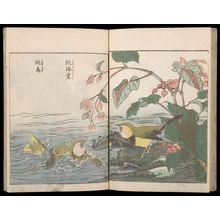北尾重政: Sketches of Birds and Flowers (Hanatori sharei zu), Vol. 2 - ハーバード大学